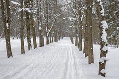 Skibahn im Schnee entlang dem Baumweg im Park im Winter stockfotografie