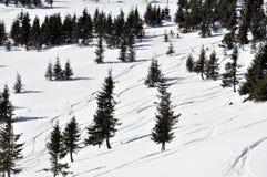 Skibahnen im Pulverschnee und -tannenbäumen Stockfotos