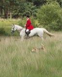 Skicklig ryttare med en engelsk pekarehund i fältet Fotografering för Bildbyråer