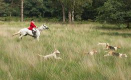 Skicklig ryttare med engelsk pekarehundkapplöpning i handling Royaltyfria Foton