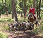 Skicklig ryttare med engelsk pekarehundkapplöpning i handling Arkivbilder