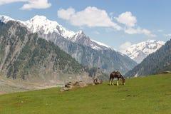 Skicklig ryttare med hästen i berg Arkivbilder