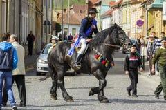 Skicklig ryttare på svart dray-häst Royaltyfri Bild