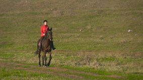 Skicklig ryttarinna som galopperar på ett grönt fält på hästrygg långsam rörelse arkivfilmer