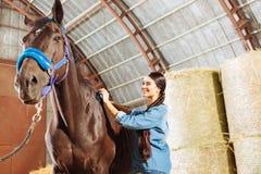 Skicklig ryttarinna som tycker om hennes ockupation, medan göra ren den mörka hästen royaltyfria foton