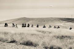 Skickliga ryttare fortsätter i gåsmarsch till och med högt gräs royaltyfria foton