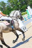 Skickliga ryttaren rider en grå häst i konkurrens av showjumping royaltyfri fotografi