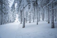 Skidåkare i den vita vinternaturen Arkivfoto