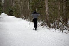 Skidåkare i skogen Royaltyfri Fotografi