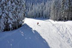Skidåkare på ett skidaspår och snöig granträd Arkivbilder