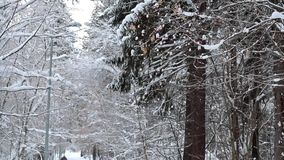 Skidåkaren i en vinter parkerar stock video