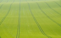 Skid marks in a crop field Stock Images
