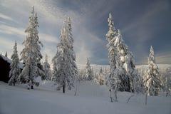Trevliga skogtrees Fotografering för Bildbyråer