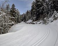 Skidar slingor för längdlöpning i bergskog arkivfoto