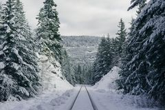 Skidar slingor på en brant snöig kulle i skogen arkivbilder