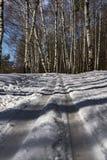 Skidar spår i skog fotografering för bildbyråer