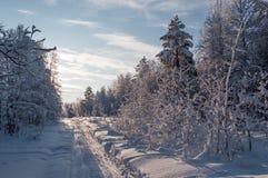 Skidar spåret i en snöig skog på en solig dag Arkivfoto