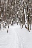 Skidar spåret i vinterträt Fotografering för Bildbyråer