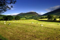 Skiddaw Fotos de Stock Royalty Free