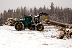Skidder hauling spruce tree Royalty Free Stock Photo