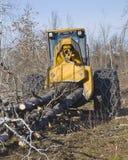 Skidding fresh cut trees Stock Photos