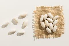 Skidfrukt för marinböna Slutet av korn fördelade upp över den vita tabellen royaltyfri bild