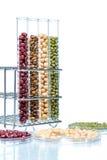 Skidfrukt med vete som ändras genetiskt, växtcell Arkivbild