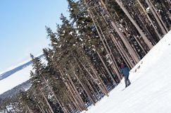 Skier carving down from steep slope. In forest Stock Image