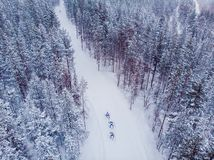 Free Skier Cross-country Skiing In Snow Forest. Winter Competition Concept. Aerial Top View Royalty Free Stock Photos - 151052738