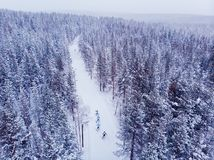 Free Skier Cross-country Skiing In Snow Forest. Winter Competition Concept. Aerial Top View Stock Images - 151052874