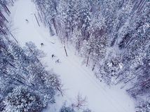 Free Skier Cross-country Skiing In Snow Forest. Winter Competition Concept. Aerial Top View Royalty Free Stock Photography - 151057577