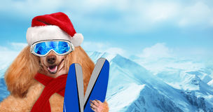 Skier dog in red Christmas hat wearing sunglasses relaxing in the mountain . Royalty Free Stock Photo