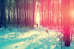 The skier with a dog in winter forest Royalty Free Stock Photos
