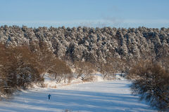 A skier in the frozen river among woodlands in the winter Royalty Free Stock Photography