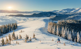 Skier going down the mountain. On slope in a sunny day. Carpathians. Ukraine, Europe Stock Image