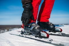 Skier hand fastens the fastening of skis closeup. Winter active sport, extreme lifestyle. Downhill skiing Stock Images