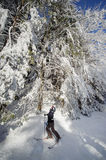 Skier looking up on the beautiful trees covered in show Stock Photography