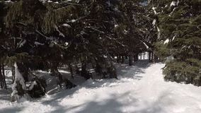 Skier rides through the forest along the trail, POV view stock footage