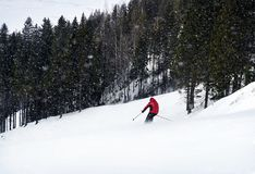 A skier is skiing down the slope in a forest. Man is wearing red jacket. Stock Image