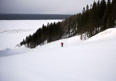 A skier is skiing down the slope in a forest. Royalty Free Stock Photography