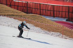 The Skier is skiing downhill at Yangji Pine Resort. Royalty Free Stock Image