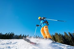 Skier skiing in the mountains. Low angle shot of a male skier skiing on fresh snow in the mountains on a sunny beautiful day. Blue sky and winter forest on the Royalty Free Stock Photo