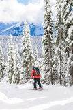 Skier skiing  on sunny day,mt Rainier national park,Washington,USA. Royalty Free Stock Photos