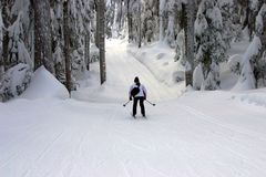 Skier skiing in Winter forest Stock Photos