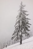 Skier under a snow-covered tree in mountains Royalty Free Stock Photo