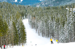 Skier in the winter forest Royalty Free Stock Photography