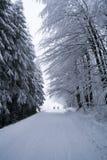 Skiers Arkivfoto