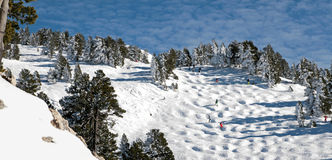 Skiers go down a ski piste with bumps in the middle of fir trees. A landscape of the French Alps covered with snow. Skiers go down a ski piste with bumps. There Royalty Free Stock Photography