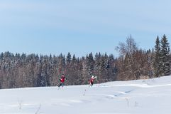 Skiers run in the winter forest under the blue sky stock image