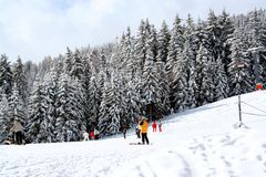 Skiers on snowy mountainside. Scenic view of skiers on snowy mountainside with forest in background, Swiss Alps stock photos